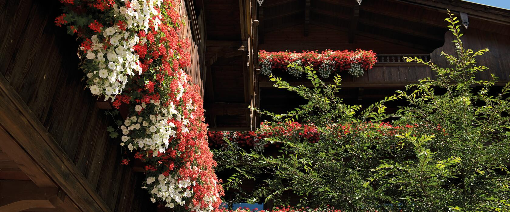 Summer Holiday Offers in Alpbach: Prices at the Hotel Böglerhof